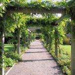 Idealne krzewy do przydomowego ogrodu