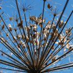 Sposoby przesadzania roślin
